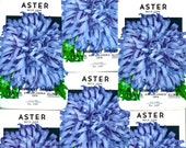 10 Original Vintage Aster Flower Seed Packs R.H. Shumway Seedsman Rockford Illinois. Nice Items to Frame. Great Craft Items. Scrapbooking...