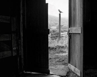 Old Barn Doors View From Within, Black and White Fine Art Photography Print, Rustic, Haunting Image, signed.