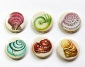 Seashell Magnets, Nature Magnets, Fridge Magnets, Kitchen Magnets, magnet set, button magnets, beach decor, beach wedding favor (3247)