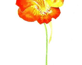 Orange Nasturtium Flower 4 Watercolor Greetings Cards Floral Handmade Art Cards, Blank Notecard Set