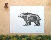 Bear Skeleton - Bear Print - Grizzly Bear Bones - Bear Anatomy - Animal Skeleton Etching - Skull - Intaglio Etching - HandPulled Print 11x14