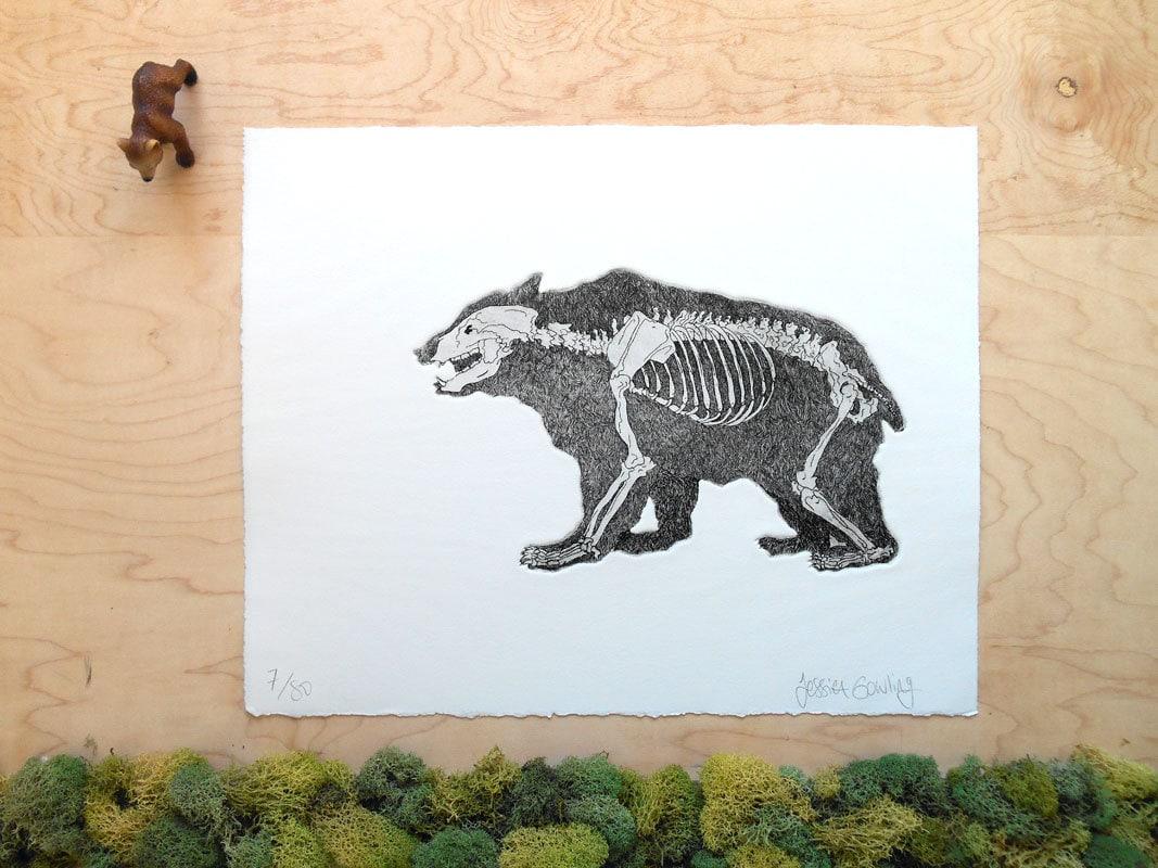 bear skeleton bear print grizzly bear bones bear anatomy