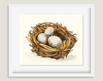 Robin Bird Nest Painting - Watercolor Robin Bird Nest - 8 by 10 print - Watercolor Painting, Archival Print, Home Decor, Nature Art