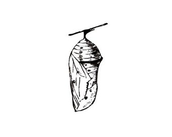 Chrysalis unmounted rubber stamp, monarch, summer, nature, transformation, Sweet Grass Stamps No.9