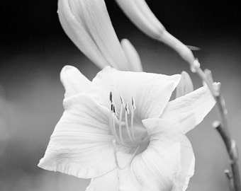 flower photography, black and white decor, nature photography, Daylily in Black and White
