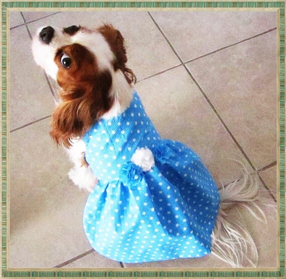 Dog Dresses Blue Turquoise Polka Dot:  Dog Clothes Pet Clothes Harness Dress Chihuahua Yorkie Shih Tzu Pug Pomeranian