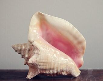 Fine Art Print, Shell Photo, Conch Shell, Pink, Beach Art, Ocean Art, Cottage Art, Seashell, Resort Art, Still life, Summer, Square Print