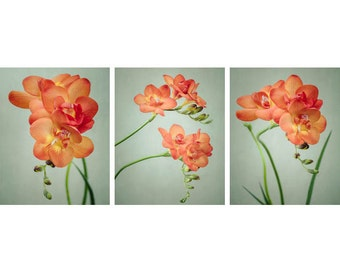 Flower Photography Set, Botanical Print Set, Freesia Flower Prints, Flower Wall Art, Modern Photography, Floral Wall Decor, Set of 3 Prints