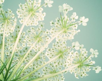 Queen Anne's Lace Flower Art Print, Flower Wall Art, Floral, Nature Photography, Flower Wall Decor, Aqua, Green
