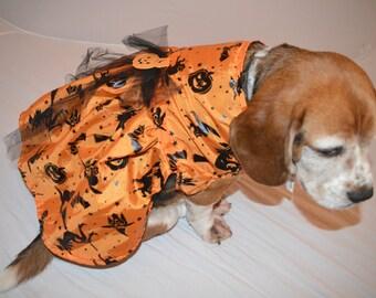 Halloween orange witch medium to large dog dress, bats, pumpkins, witches, spooky