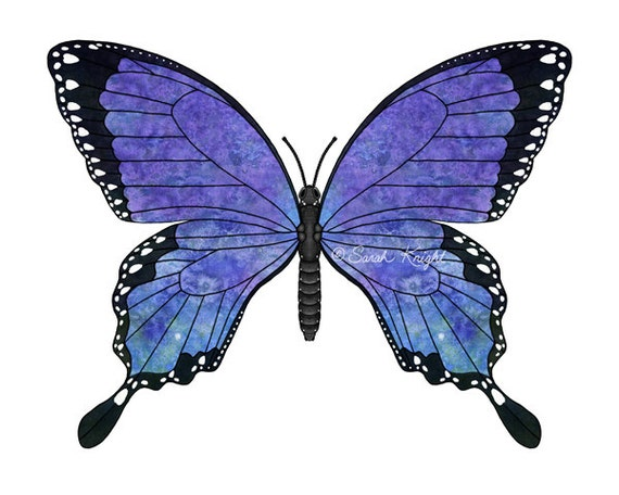 sapphire swallowtail, fantasy butterfly art print 8X10 inches, ultramarine blue coloration digital illustration