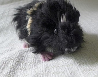 Needle Felted  Animal Sculpture Abbysinian Guinea Pig by Fiber Artist Gerry / poseable