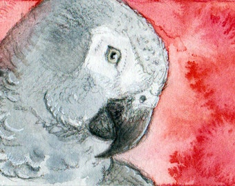 African Grey Parrot ACEO Print