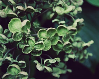 Botanical photography print dark emerald green hydrangea wall art - Deep Green
