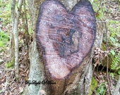 Photograph Heart Love Tree  Picture Woodland Forest Image Nature  Woodland Organic  Sweetheart Gift