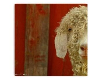 Sheep By The Red Barn White Sheep Farm Photography Natural History Nature Print