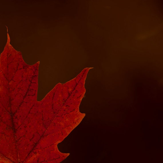 Red maple leaf, red leaf, autumn leaves, brown, burnt umber, cranberry, crimson, ruby red, October, autumn decor, rustic