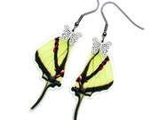 Real Butterfly Wing Earrings (Agetes Hindwing - E005)