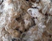 Raw Lincoln Fleece, beautiful wavy wool - Fresh from the flock