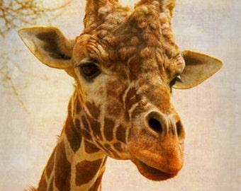 Giraffe I - 4x6 Fine Art Photograph