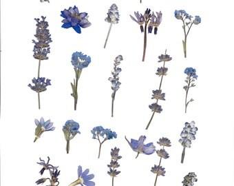 clip art digital sheet of blue pressed flowers