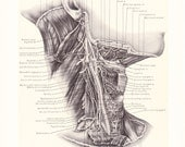1899 Human Anatomy Print - Deep Structures of Neck - Vintage Antique Medical Anatomy Art Illustration for Doctor Hospital Office