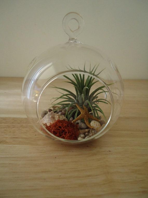 Tillandsia Air plante bromelia suspendus Terrarium, prêt pour Gifting