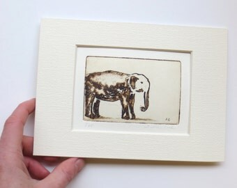 elephant - original etching, dry point and aquatint.