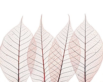 Modern leaf abstract rose pink macro pastel soft lilac closeup nature pale minimalist - Leaves 8 x 10