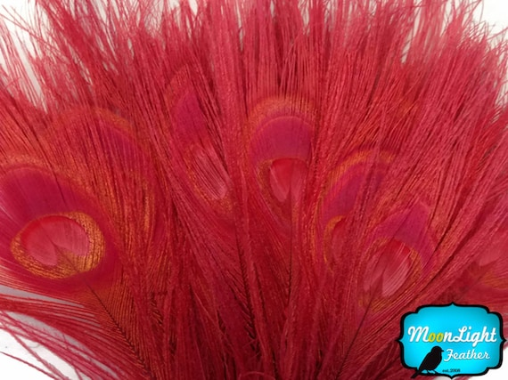 Peacock Feathers, 5 Pieces - RED Bleached and Dyed Peacock Tail Eye Feathers: 265
