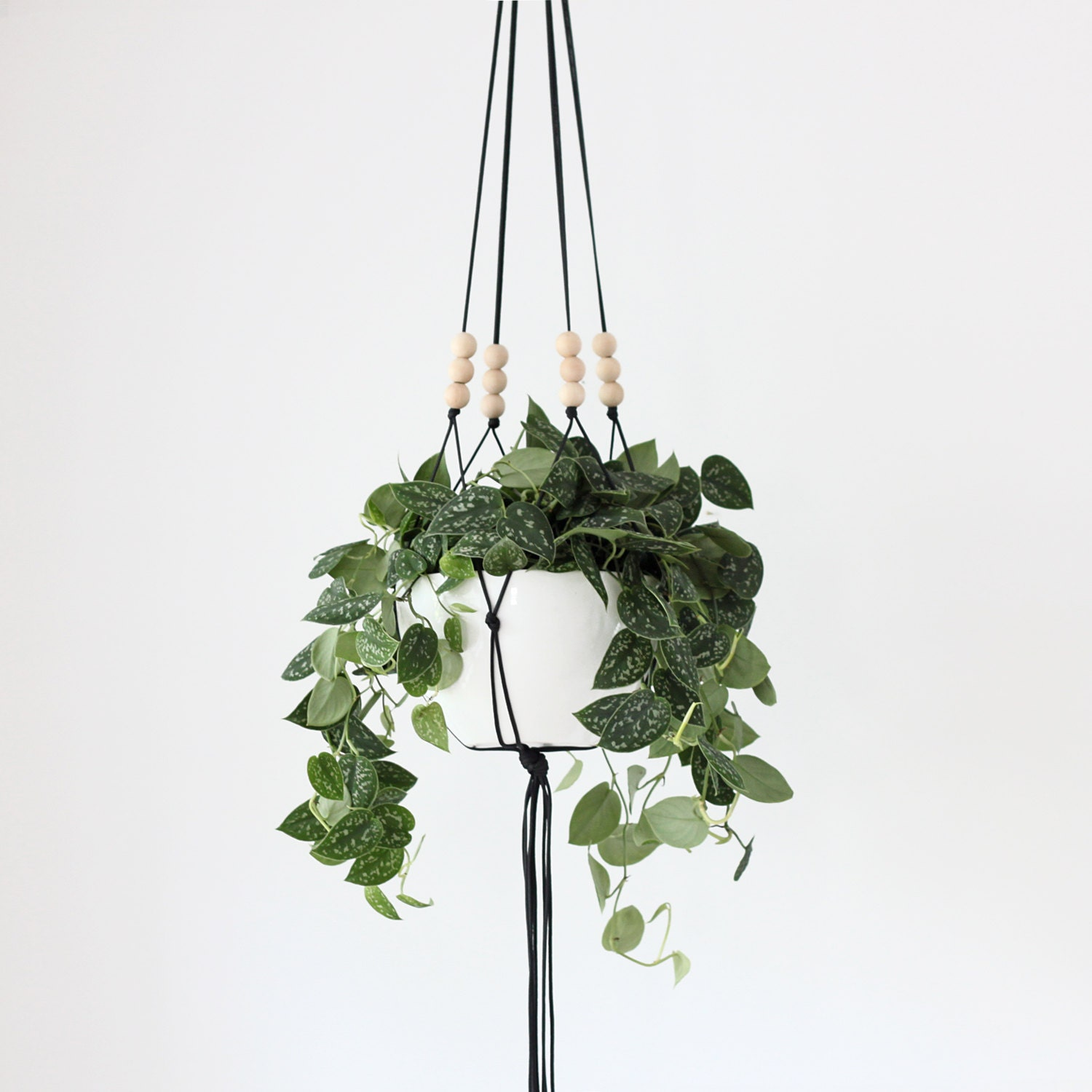 More Colors Large Hanging Planter Without Pot Modern