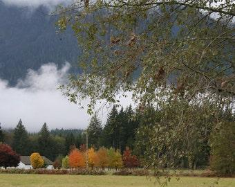 Awesome autumn trees landscape 48 x 32 downloadable photograph