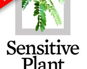 "SALE 10 ""Sensitive Plant"" Seeds - Moves When Touched - Mimosa Pudica - 10 seeds - Planter Container Home Living Garden Lifestyle SALE"