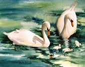 Swans with Cygnets 11 x 14 watercolors archival print ecofriendly watercolorsNmore