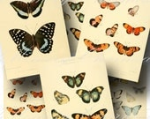 Butterfly Digital Collage Sheet SALE!! Vintage Natural History, Victorian Encyclopedia, Butterflies Digital Download ATC #3 INSTANT Download