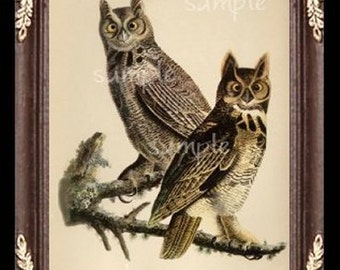 Owl Owls Miniature Dollhouse Art Picture 1127