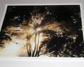 Sunrise Photograph - Sunshine Through The Trees - Nature Photo - 8 x 10 - Landscape Photo - Tree Photo - Sunrise Photo