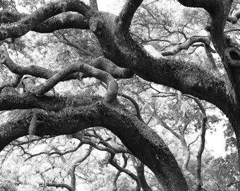 Live Oak Tree-Spanish Moss-Large Vertical Wall Art-Fine Art B&W Print-Tree Photography-Surreal-Ethereal-Nature Photography-Southern Art