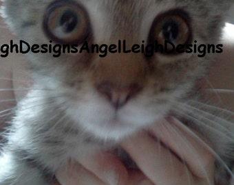 Kitten Love digital download, pet, big eyes, furdaughter