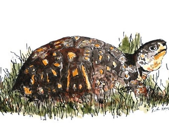"Box turtle watercolor original reptile painting 7"" x 5"" animal art pen and ink brown tortoise"