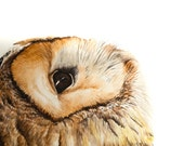 Contemplative Barn Owl - Original Watercolor Art Print 5x7