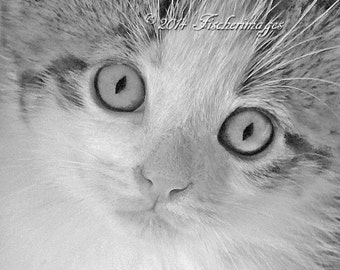 Close Up of Kitten Face Black White Photo Wall Art Home Decor Digital Download Fine Art Photography