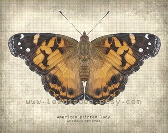 Butterfly Entomology Print - Painted Lady - Vintage Style Original Photo Illustration - Nature Specimen Texture Aged Wall Art Book Plate