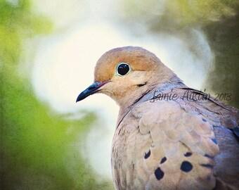 Morning Dove Portrait 11x14 Fine Art Photograph - Dove, Bird, Nature