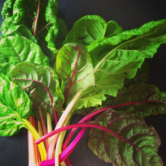 Organic Rainbow Five Color Silverbeet Chard Seeds