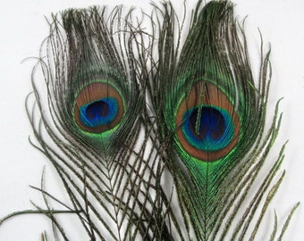 2 Peacock plumes eyes  feathers pce-00 peacock feathers craft feathers