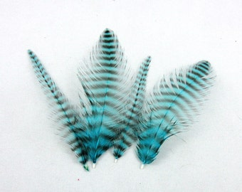 24 teal blue grizzly Feathers 2 to 3 inches NGB2 k