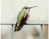 Hummingbird Wall Art, Nature Photography, Bird Photograph, Spring, Biege Wall Deor, Minimalist, Still Life, Hummingbird Wall Decor