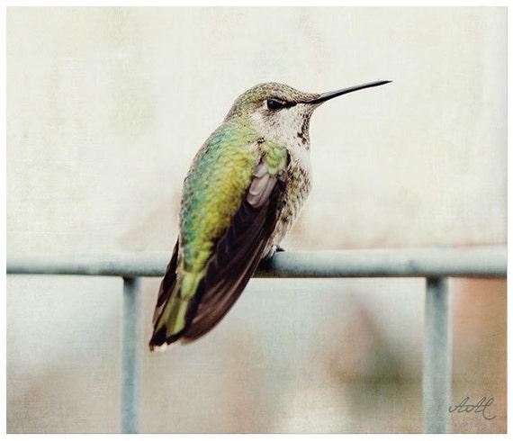 Hummingbird Wall Art Nature Photography Bird Photograph