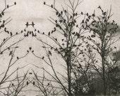 etching, Flight Pattern, original modern print